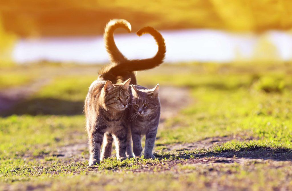2 cats walking in an open field