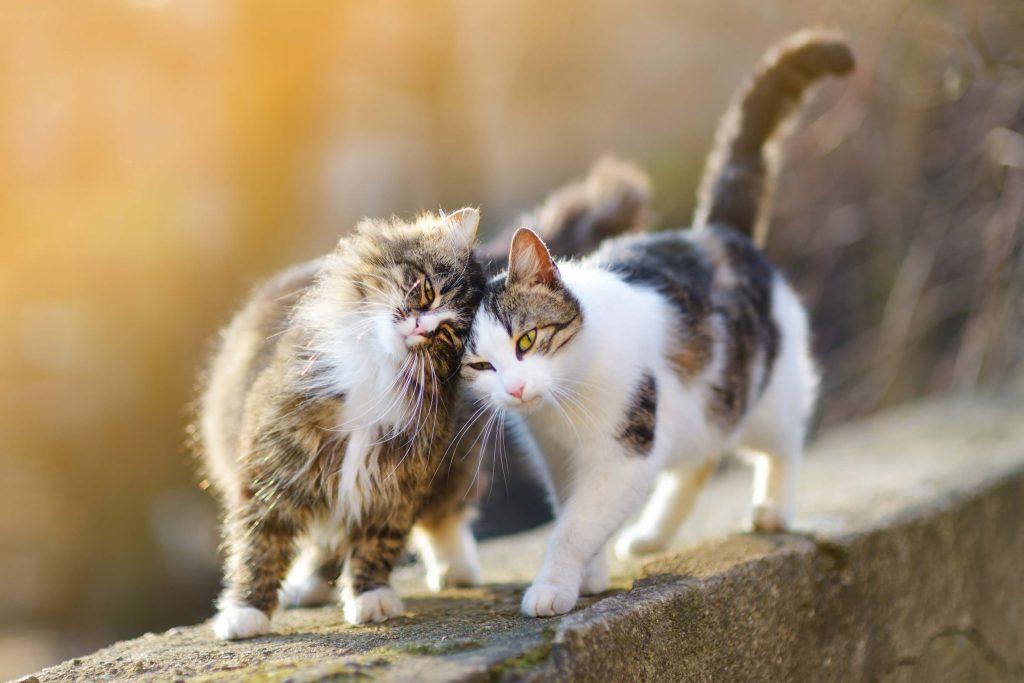 2 cats walking on a pavement