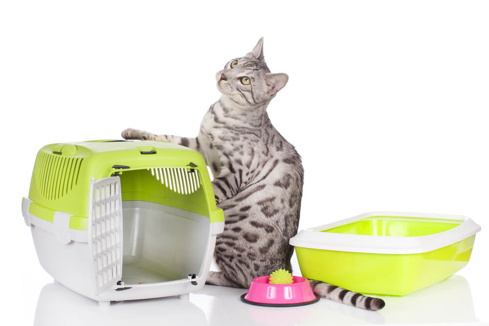 Cat with litter box