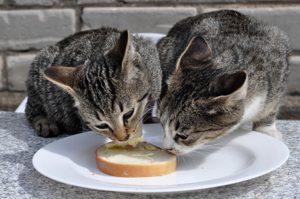 2 Cats Eating Bread