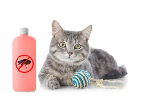 Best cat flea shampoo