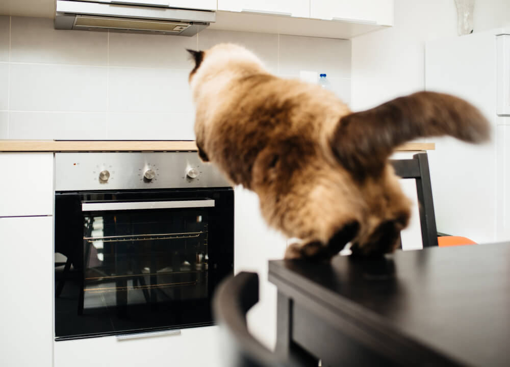 Cat Jumping In The Kitchen