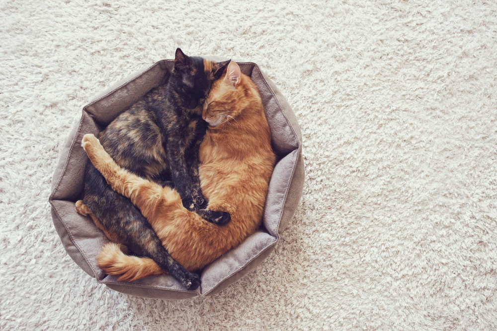 2 Cats Sleeping in Cozy Bed