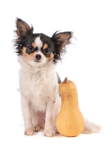 dogs eat Butternut Squash