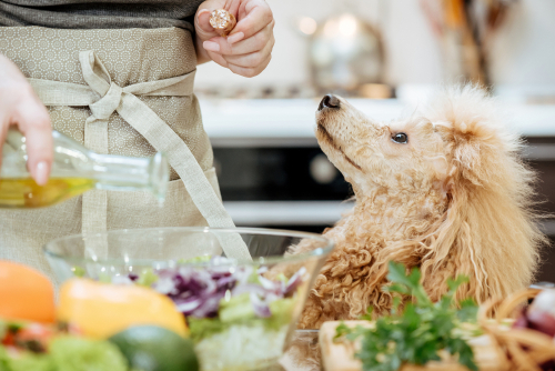 Dog and vegetable oil