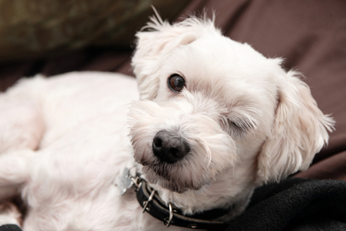 Dog wink