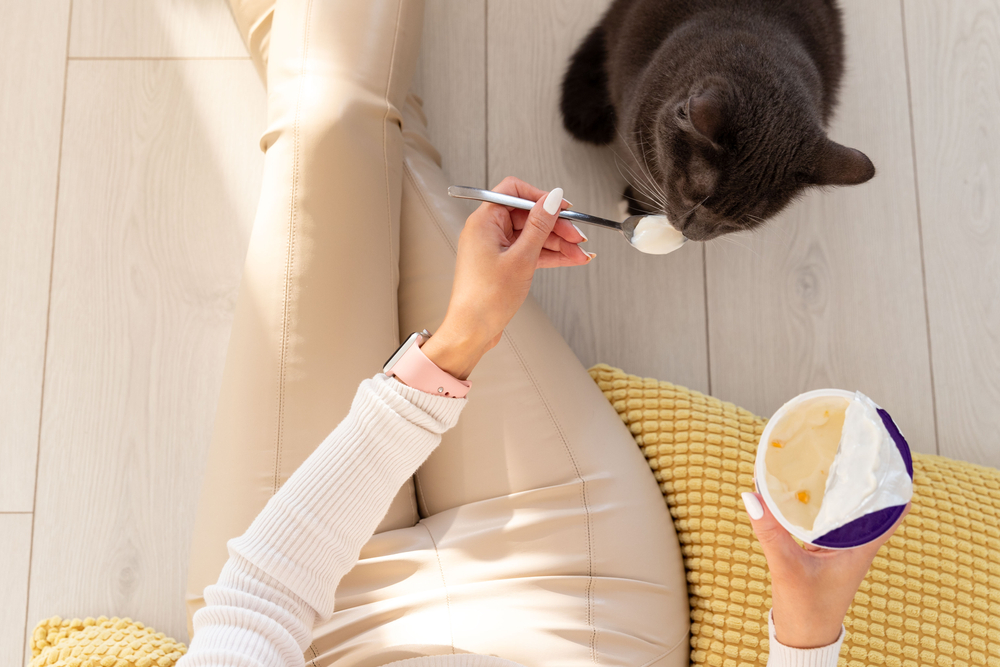 Woman feeding cat yogurt