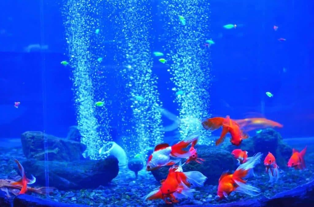 Aquarium bubbler