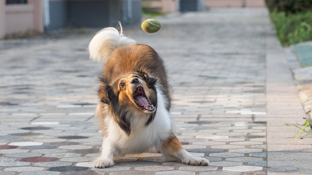 An Excited Dog