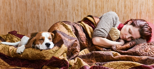 Why Does My Dog Lay on Me? We all know that our dogs love to cuddle up with us at any time, any place, and for any reason. If you're lying on the couch or the bed and your dog sees that your lap is empty, they may look at that as an open invitation. Big or small, lots of dogs like to lay on their owners.   But why?   Some dog parents love it, others not so much. Whether you view your dog laying on you as comforting or suffocating, we've got answers. This behavior is fairly common, and we'll tell you why your dogs like to lay on you and how you can stop it if that isn't your thing. But first, we'll give you the info so that you can make an informed decision.   Stay tuned!  So, Why Does My Dog Lay On Me? Because dogs are affectionate animals that consider their owners to be family members and part of their pack so to speak, they tend to mark their territory. The dogs that like to lay on you do so because they want to show their love and offer security and comfort. They also want to be on the receiving end as well.   So think of it this way, your dog feels like they are protecting and cherishing their loved one, even though there's no danger in sight.  What Does It Mean When Your Dog Lays On Top of You?  Dogs are pretty intelligent beings. They know how to get what they want from their owners. Here go some of the messages and signals your dog may be trying to send you when they hop onto your chest out of nowhere.   ●Your dog wants your attention ●He/She feels sad ●He/She is bored ●He/She is scared ●Your dog feels like protecting you ●Small puppies do this when they miss you and any siblings they may have ●Separation anxiety ●Your dog feels the safe position  ●They think you like it  It is a little tricky to figure out exactly what your dog is trying to say, as their intentions could also be sneaky. Aha, sometimes our sweet little mischievous companions could be trying to hide something they did wrong, and they don't want you to see!   Perhaps they're just waiting on yo