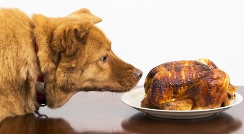 Dogs Eat Rotisserie Chicken