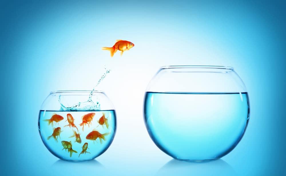 do goldfish need air